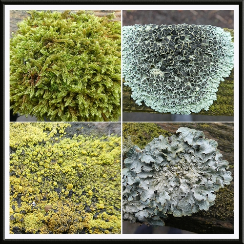lands end lichen