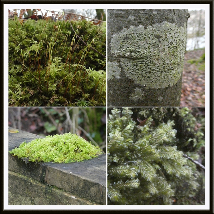 moss and lichen eastons