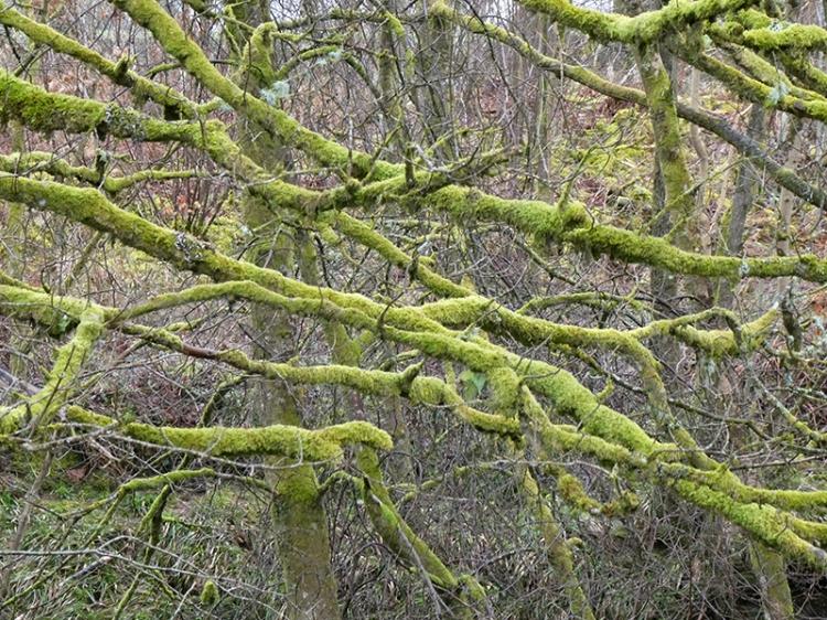 mossy branches pool corner