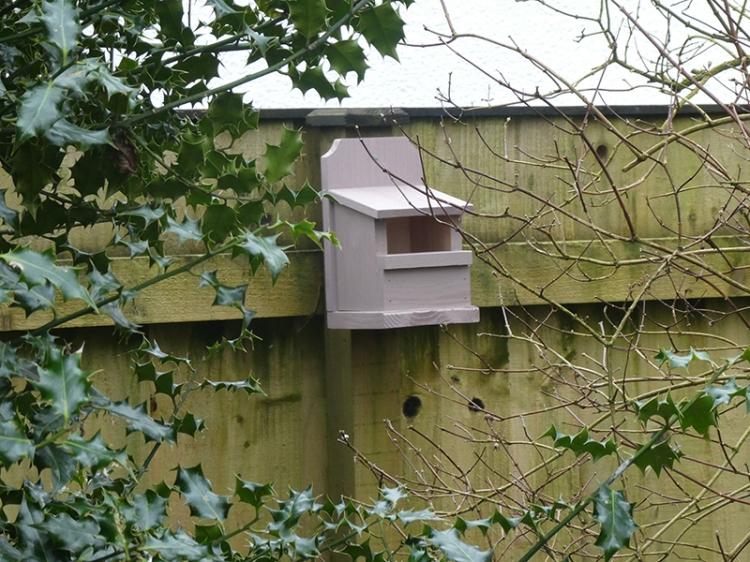 new robin box