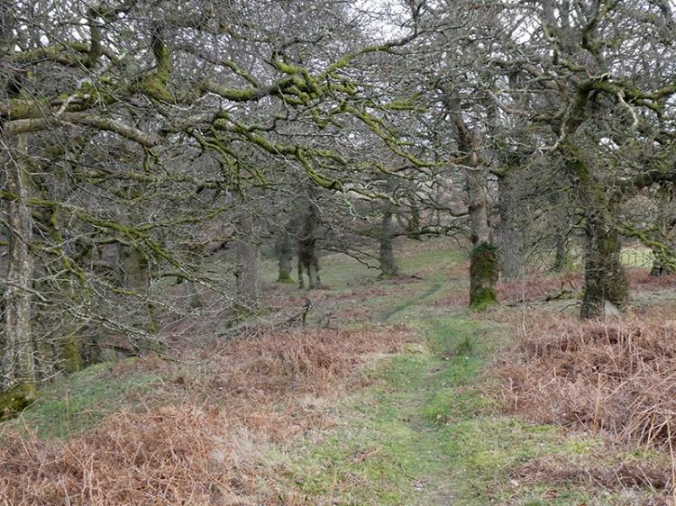 oak wood walk