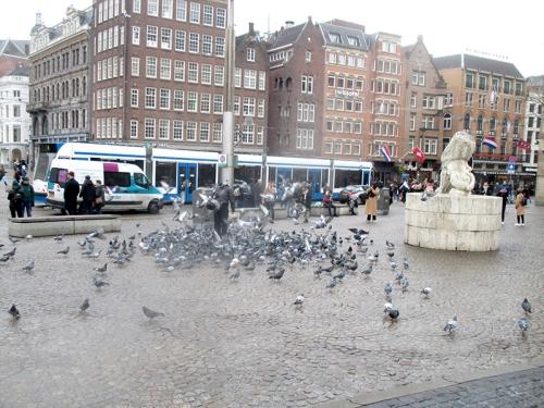pigeons amsterdam