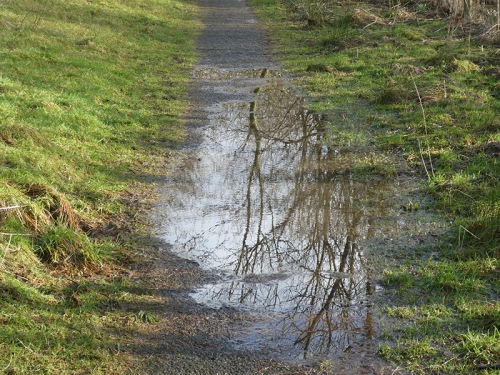 puddle new path storm ciara