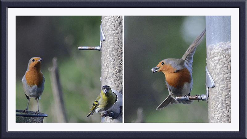 smash and grab robin