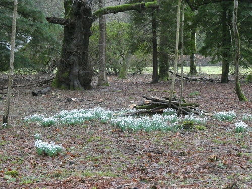 snowdrops Lodge