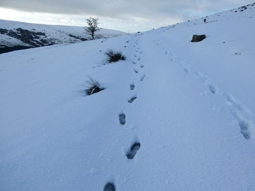 strange footsteps