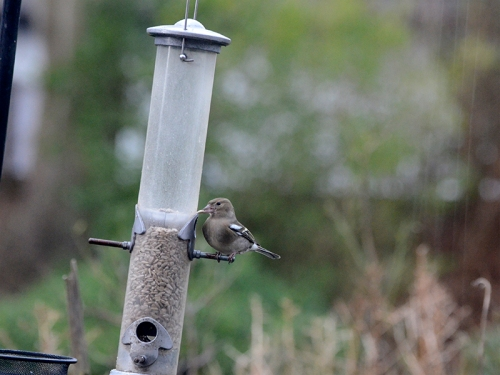 swaying feeder