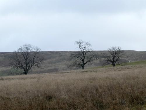 three trees whitshiels