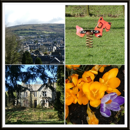 town, spring holmwood yellow crocus