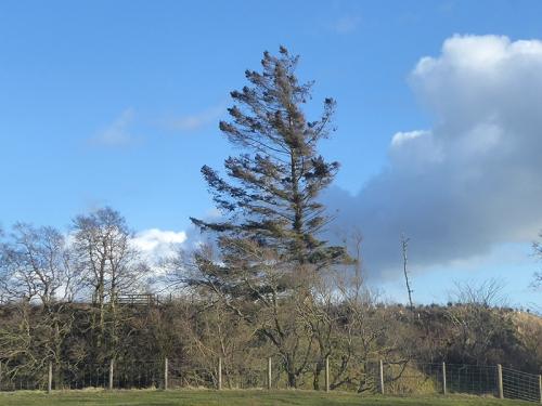 tree cleuchfoot road