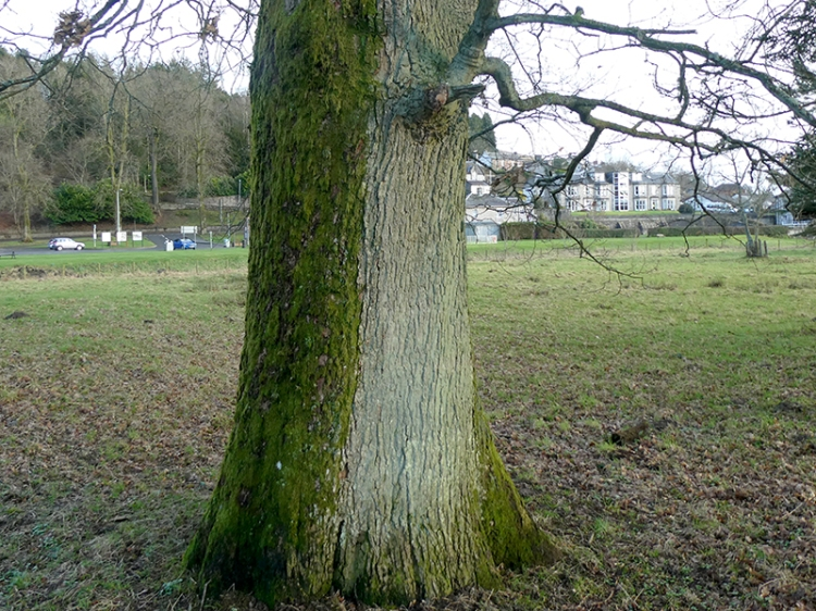 tree with moss and fungus