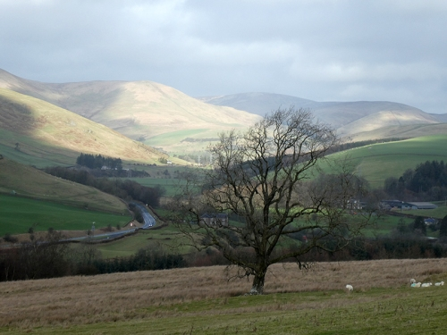 view of tree and ewes valley