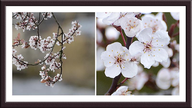blossom beside esk