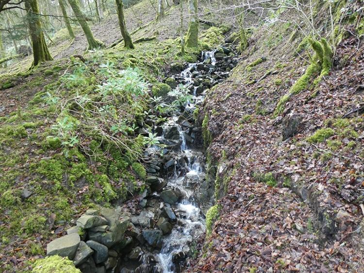 cascade near Duchess bridge
