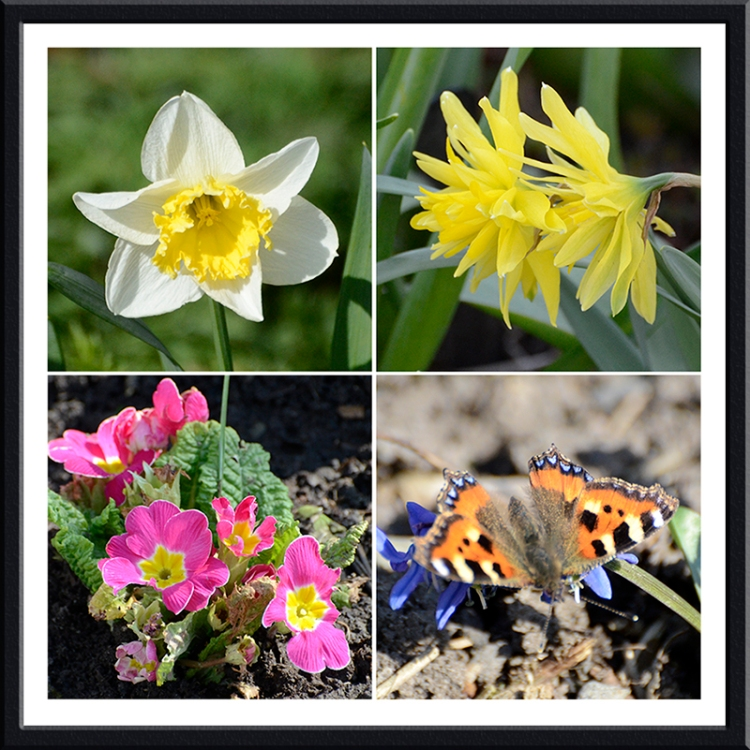 daffs, primrose and tortoiseshell