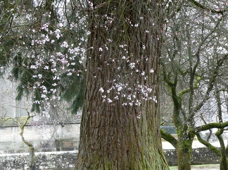 early blossom park