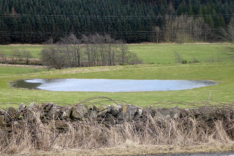 ewes puddle