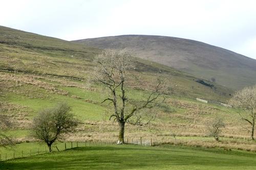 ewes tree
