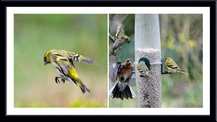 feeder activity