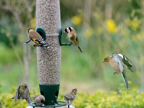 feeder picture
