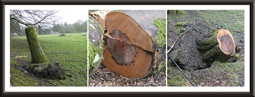 felled trees