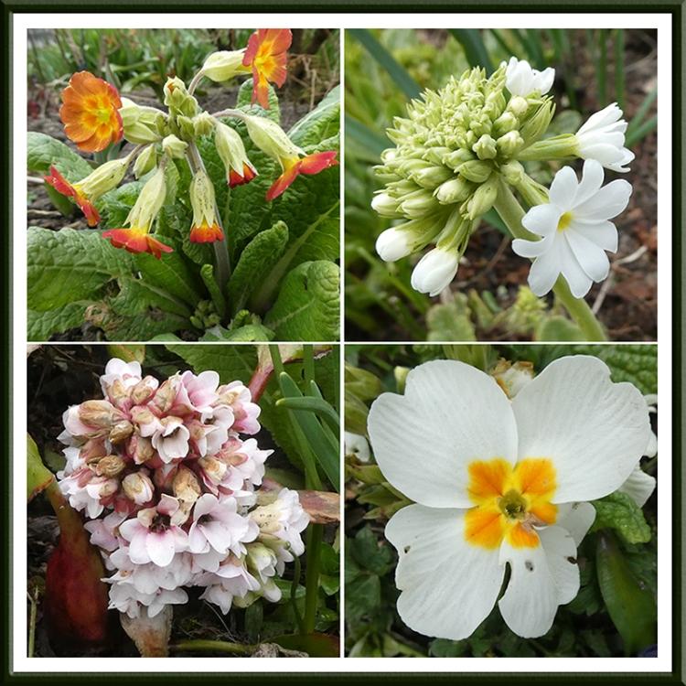 four garden flowers