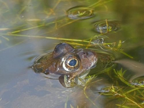 frog equinox