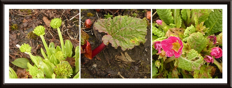 garden growth
