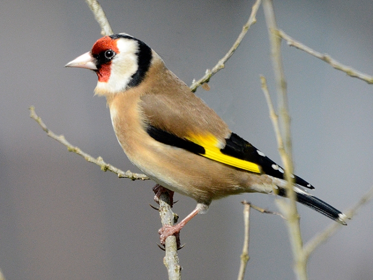 goldfinch fake tree