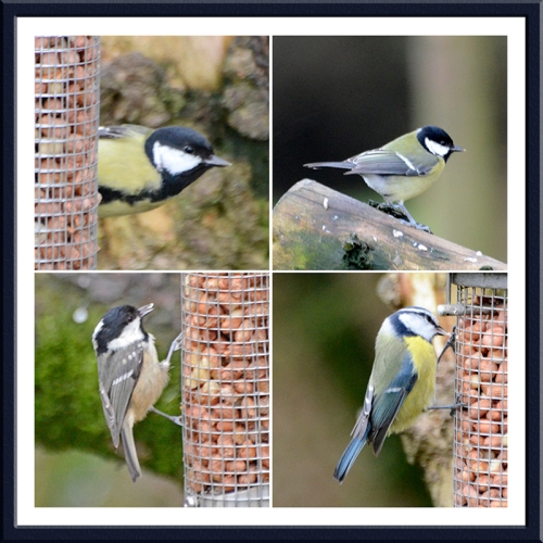 great tit, coal tit, blue tit laverock