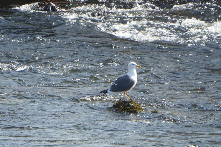 gull in sunshine