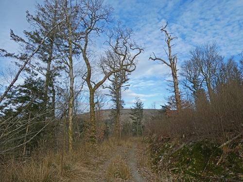 kernigal wood track