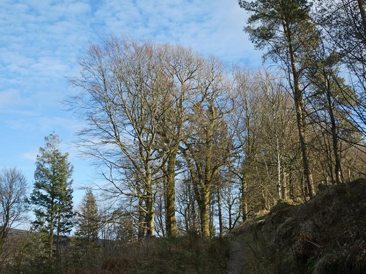 kernigal wood trees