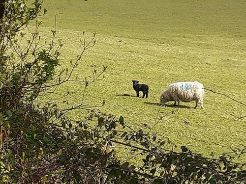 Kieran lamb