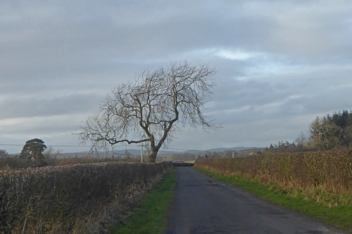 last tree in England