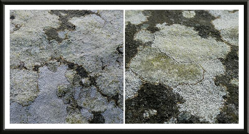 lichen on church bridge