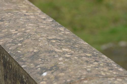 lichen on sawmill brig