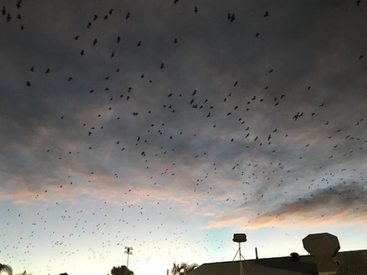 Mary Jo's bats