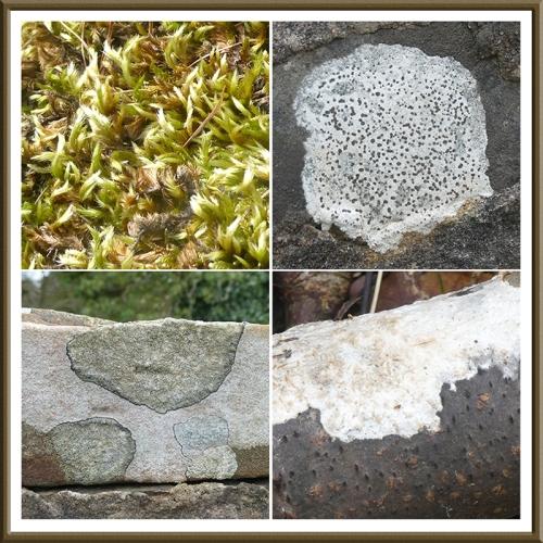 moss, lichen, fungus