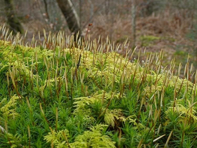 moss meadow