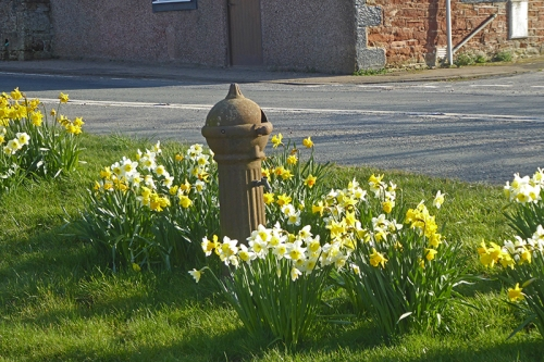 newtown pump with daffs