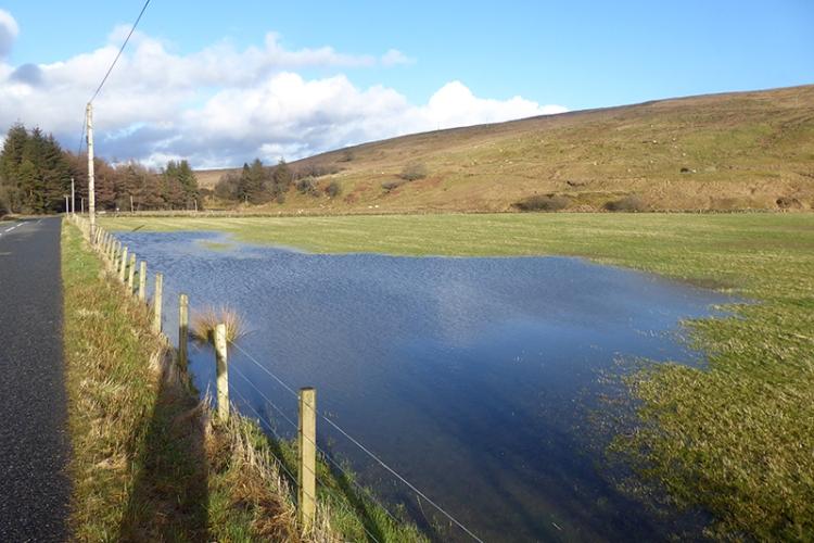 puddle blochburnfoot