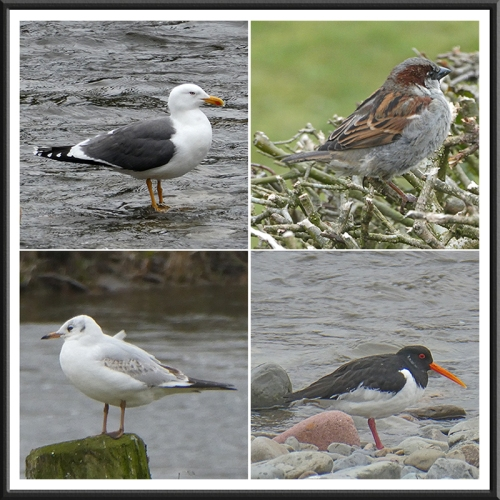riverside birds march