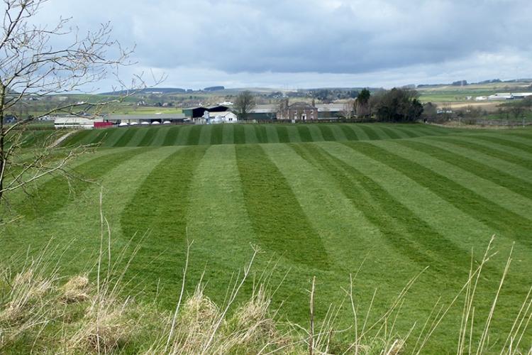 rolled field