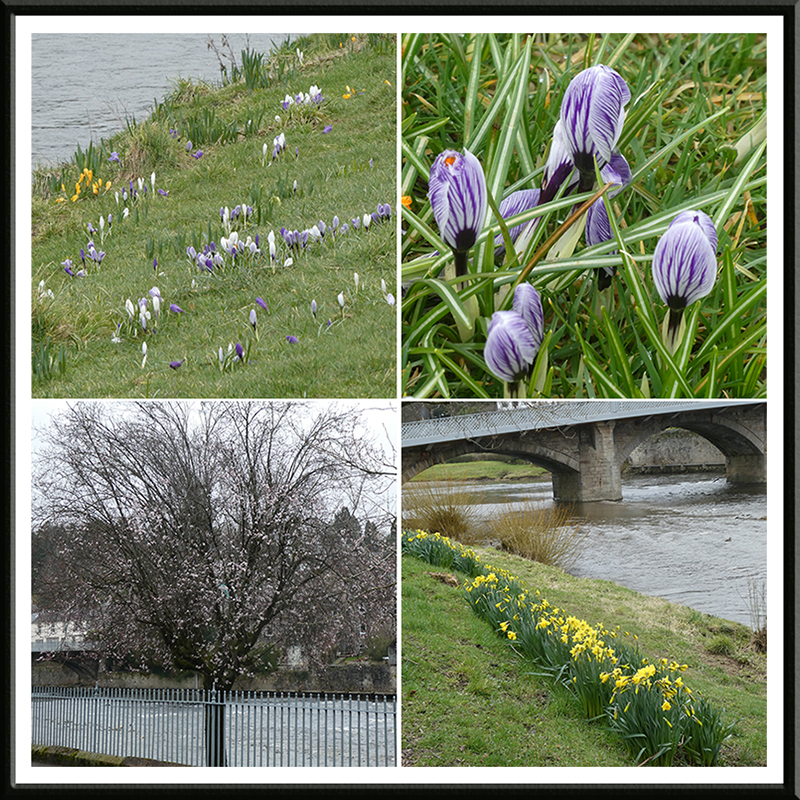 signs of spring by the river