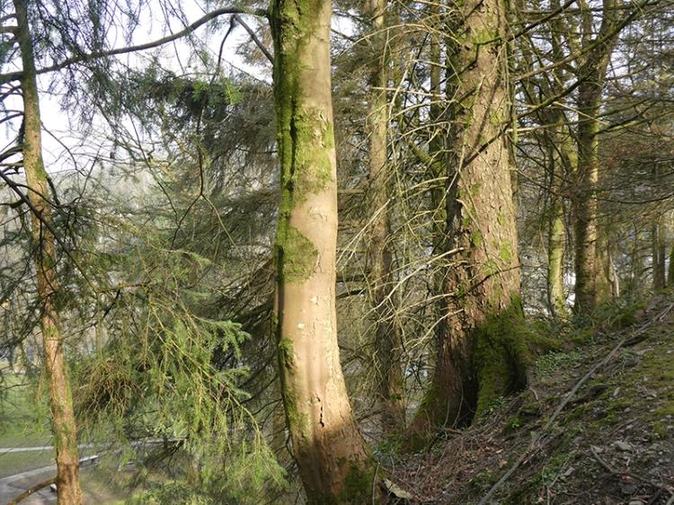 sun on trees stubholm track