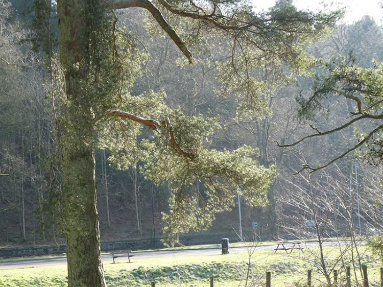 sunlit tree 1