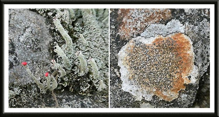 tarras car park lichen