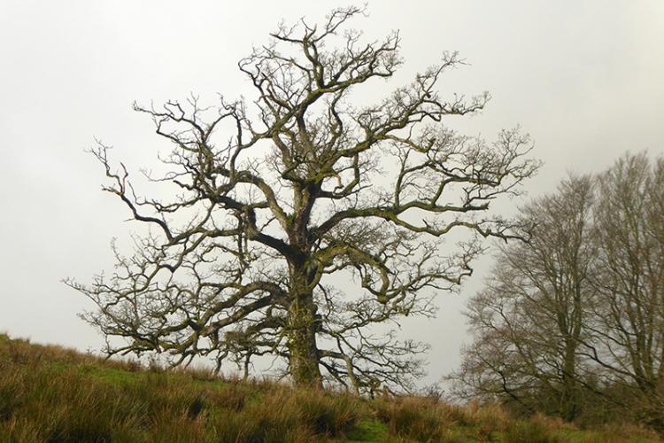 tree a Irvine house
