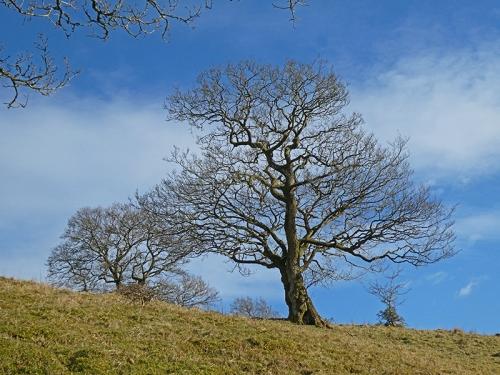tree above auld stane brig